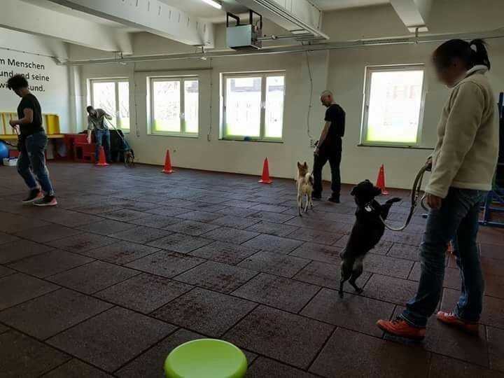 Bei-Fuß-Training in Techi's Hunde-Hotel